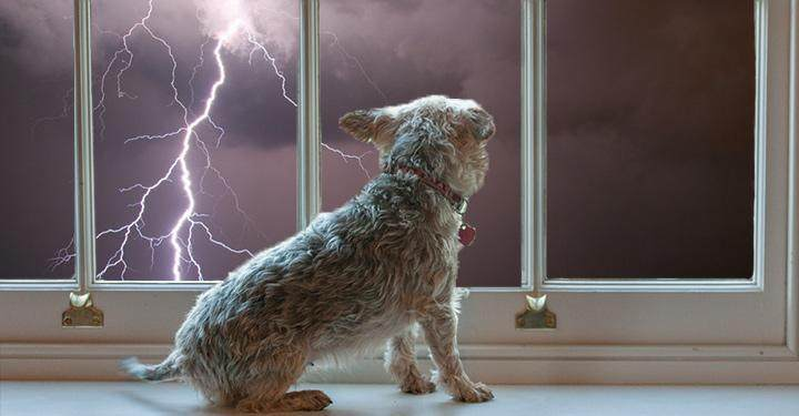 How To Calm A Dog Thunder