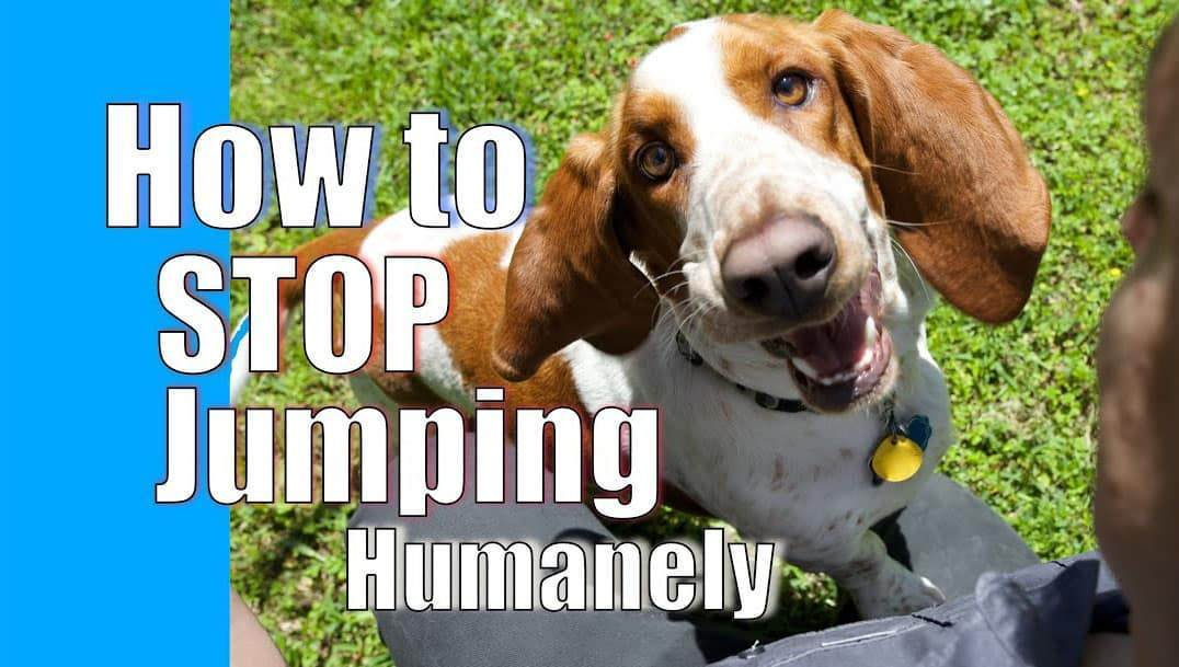 How to Stop Dog From Jumping