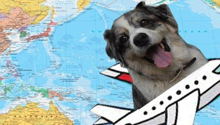 International Travel with Dog