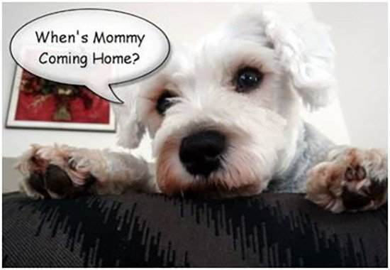Anxiety in Dogs When Left Alone