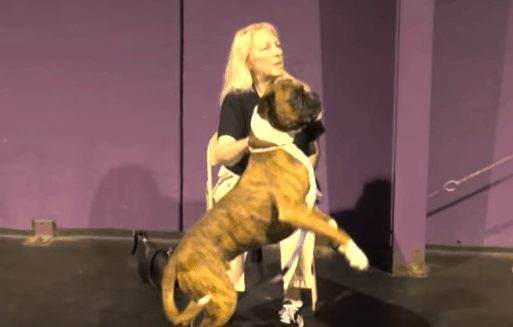 Basic Dog Training Commands Along With Special Tricks