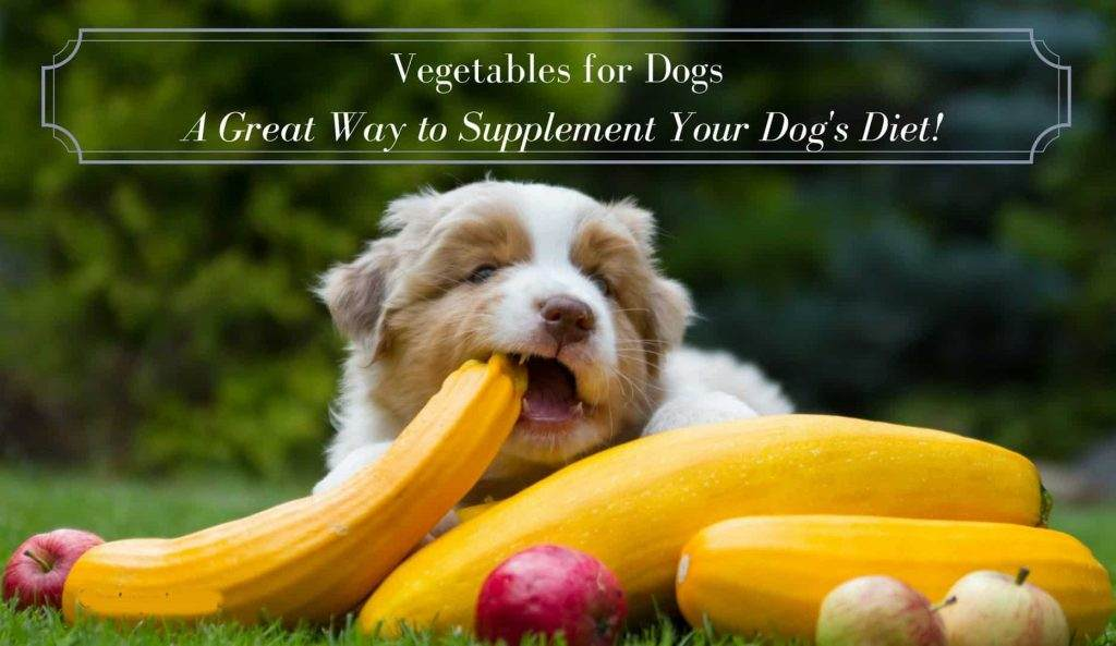 Best Supplements for your Diabetic Dog