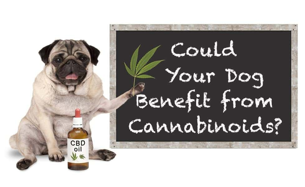 CBD Oil Helps Dogs