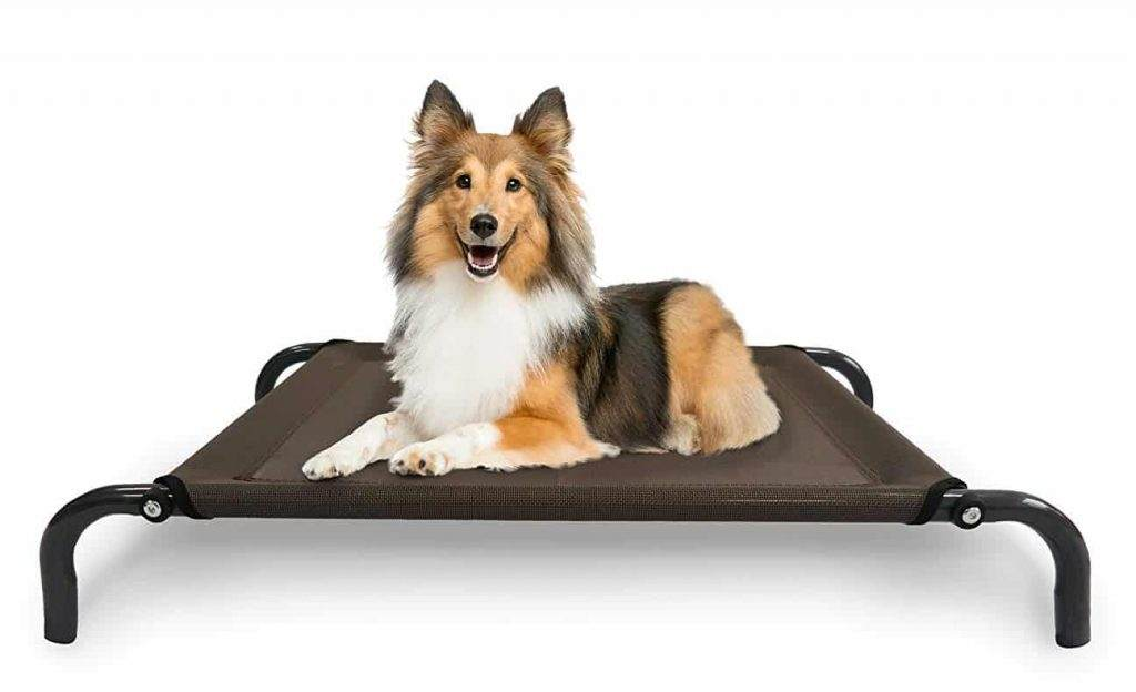 Cot Style Dog Beds