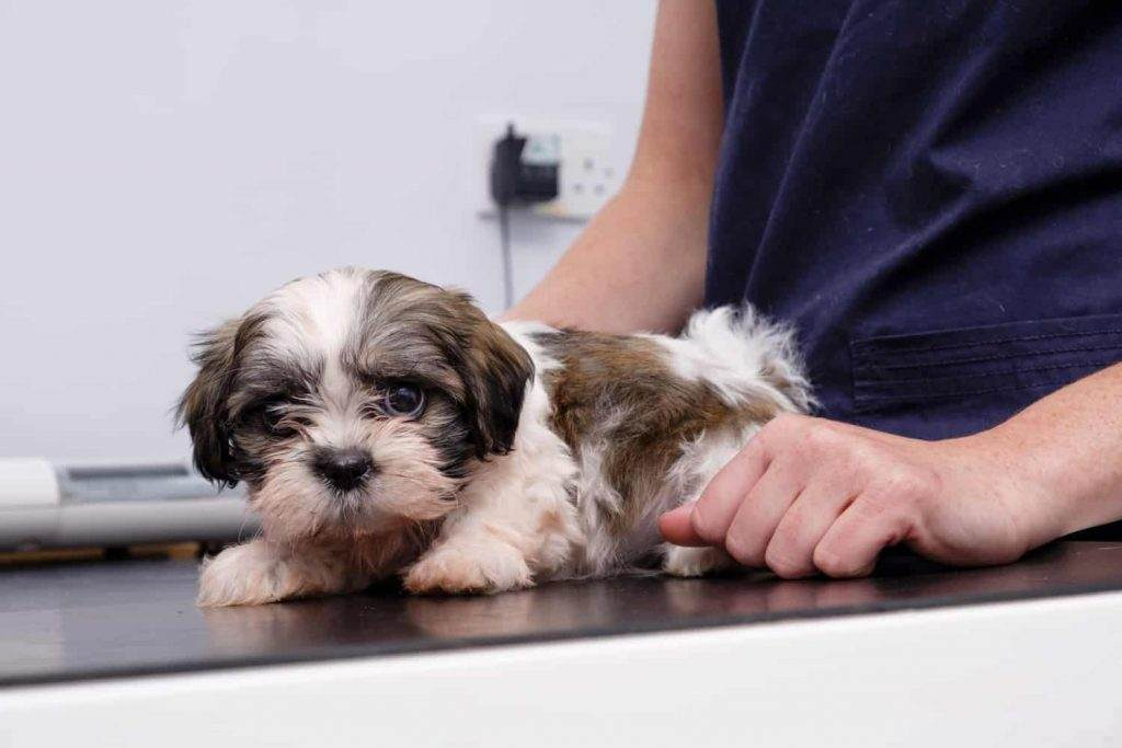 Dog Diseases and Vaccine