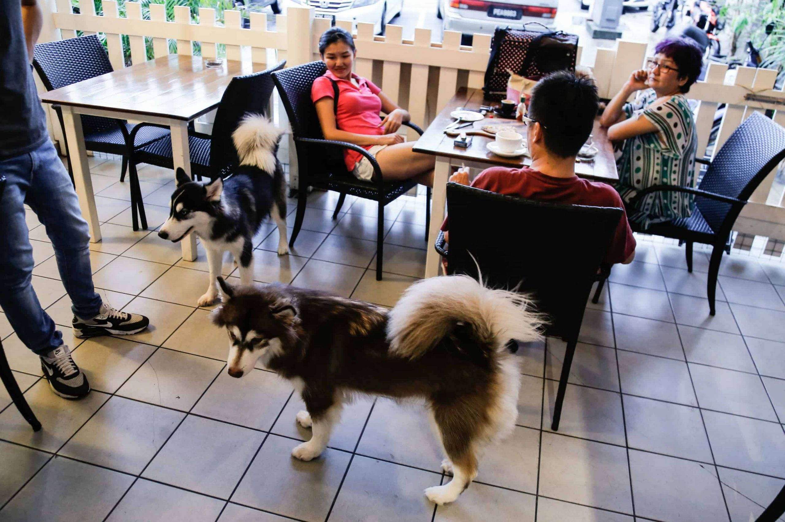 Dog Friendly Restaurants