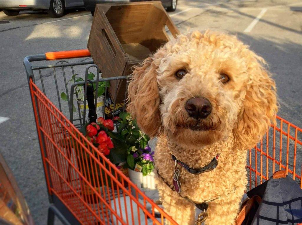 First Time Shopping With Your Dog