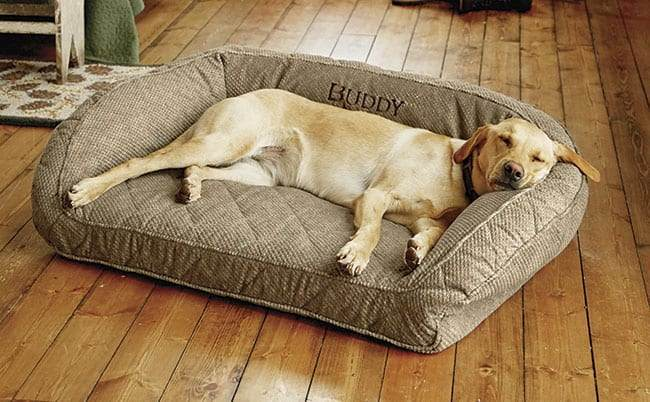 Labrador Retriever on Dog Bed