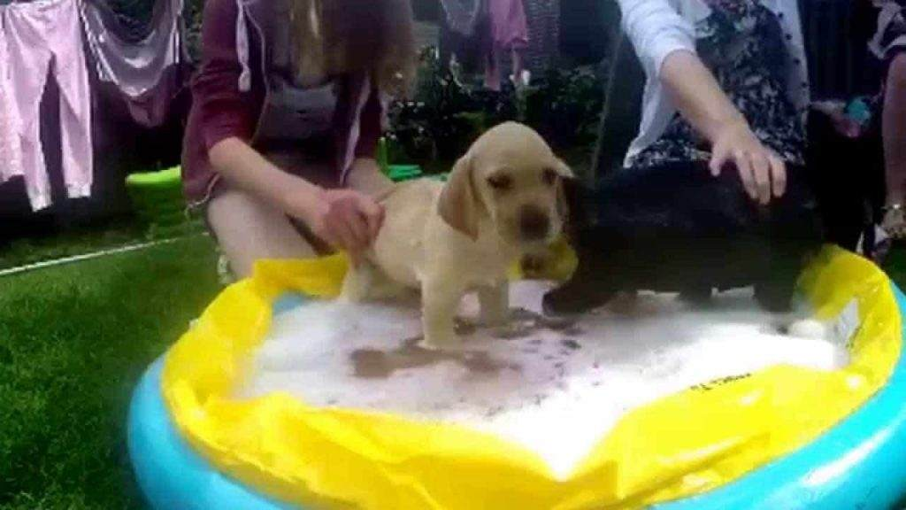 Places To Wash Your Golden  Retriever Dog