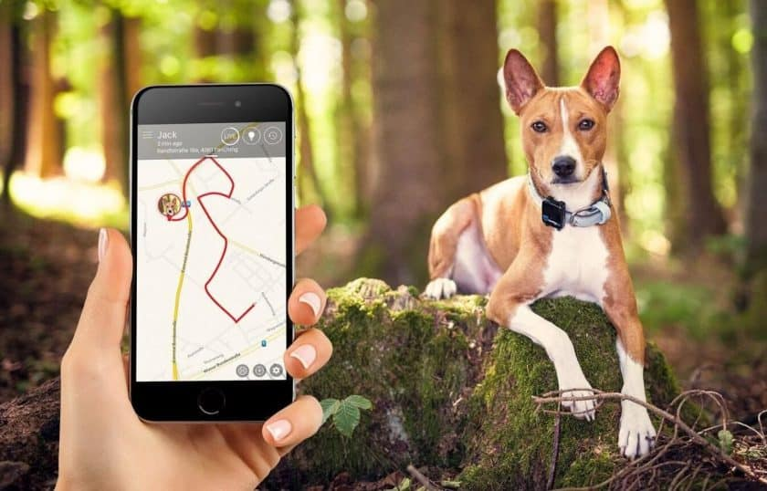 Track Your Puppy With Dog GPS
