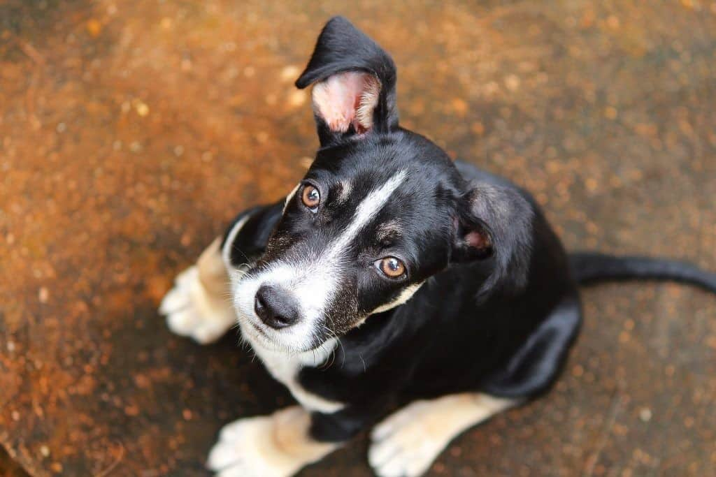 chronic constipation in dogs