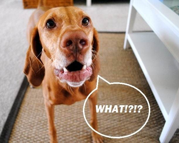 dog confused