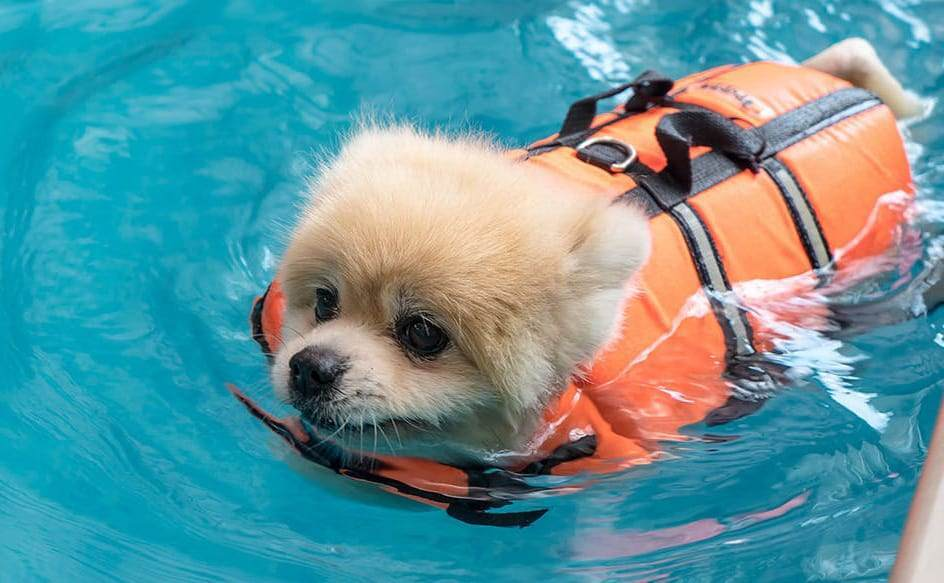 dog is an excellent swimmer
