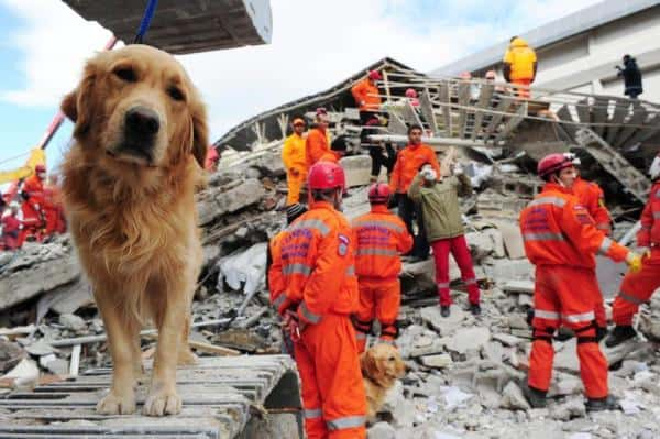 dogs in earthquakes