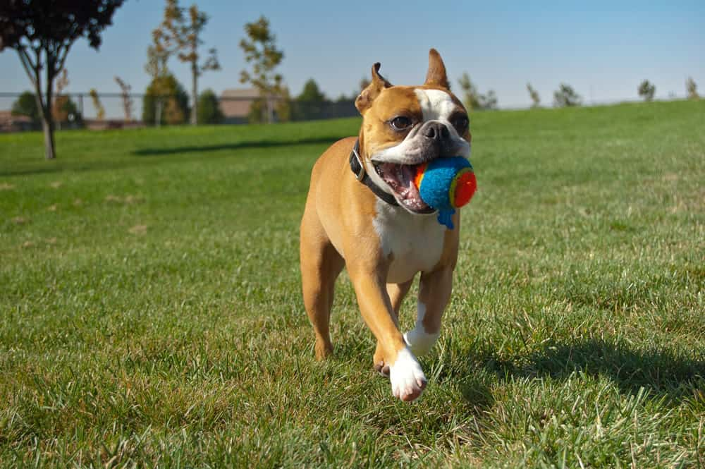 fetch game outdoors