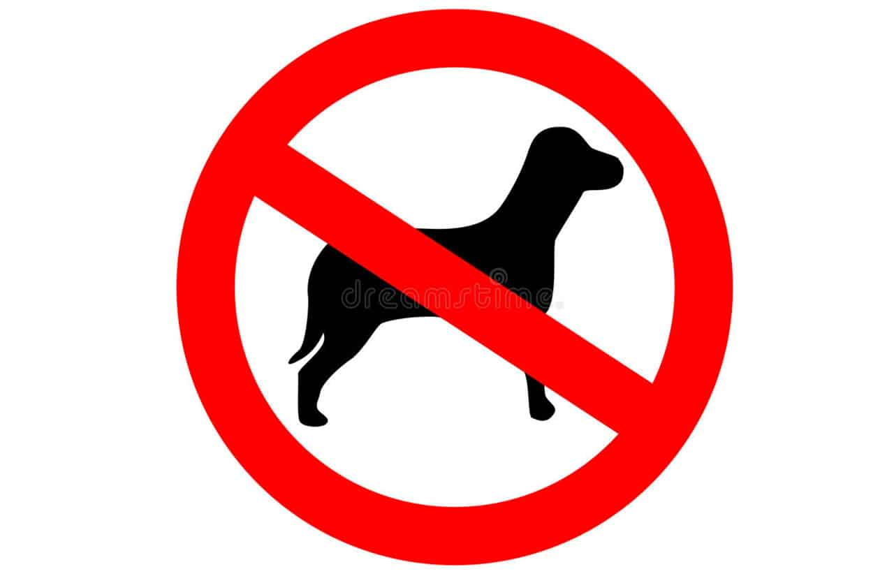 labrador not allowed