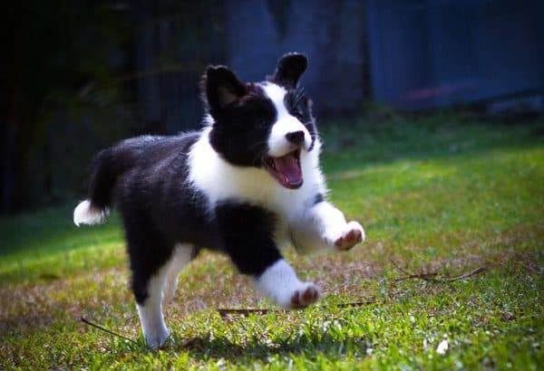 training your puppy its name